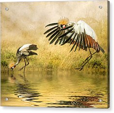 Acrylic Print featuring the photograph Grey Crowned Cranes by Brian Tarr