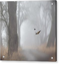 Grey Ghost Acrylic Print by Angie Vogel