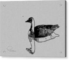 Acrylic Print featuring the photograph Grey Goose by Ludwig Keck
