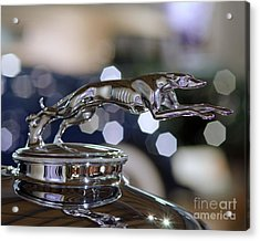 Acrylic Print featuring the photograph Grey Hound Hood Ornament by JRP Photography