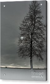 Grey Morning Acrylic Print by Steven Reed