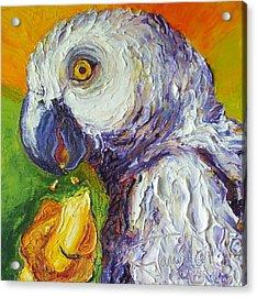 Grey Parrot And Juicy Mango Acrylic Print by Paris Wyatt Llanso