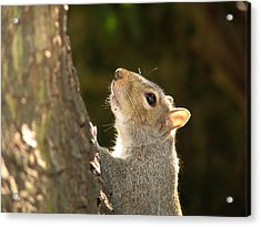 Acrylic Print featuring the digital art Grey Squirrel by Ron Harpham