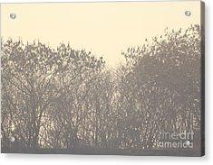 Grey Acrylic Print by Vishakha Bhagat