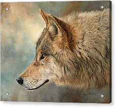 Grey Wolf 3 Acrylic Print by David Stribbling