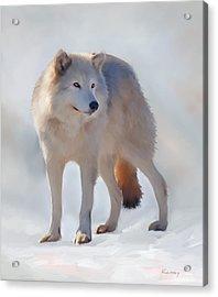 Grey Wolf Acrylic Print by Johanne Dauphinais