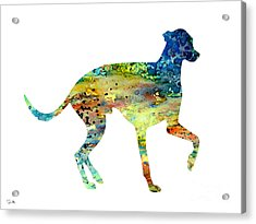 Greyhound 3 Acrylic Print by Luke and Slavi