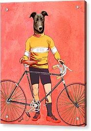 Greyhound Cyclist Acrylic Print