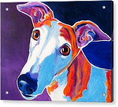Greyhound - Halle Acrylic Print