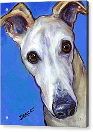 Greyhound Portrait On Blue Acrylic Print by Dottie Dracos