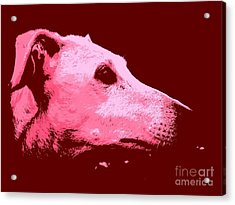 Greyhound Profile Acrylic Print by Clare Bevan