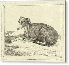 Greyhounds, Jan Dasveldt Acrylic Print by Artokoloro