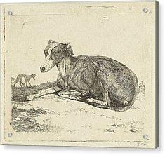 Greyhounds, Print Maker Jan Dasveldt Acrylic Print by Artokoloro