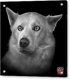 Greyscale Mila - Siberian Husky - 2103 - Bb Acrylic Print