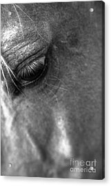 Grief Acrylic Print by Heather Roper