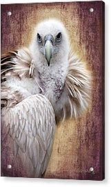 Griffon Vulture Acrylic Print by Barbara Orenya