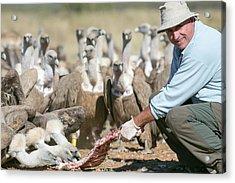 Griffon Vulture Conservation Acrylic Print