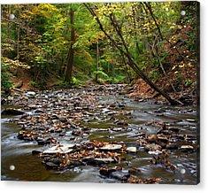 Creek Walk Acrylic Print