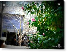 Acrylic Print featuring the photograph Grist Mill Roses by Tara Potts