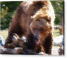 Grizz Acrylic Print by Kevin Bone