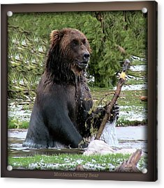 Grizzly Bear 08 Acrylic Print by Thomas Woolworth