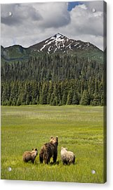 Grizzly Bear Mother And Cubs In Meadow Acrylic Print