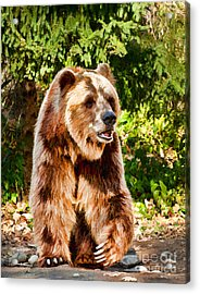 Grizzly Bear - Painterly Acrylic Print by Les Palenik