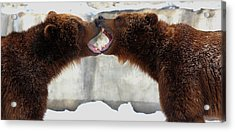 Acrylic Print featuring the photograph Grizzly Bears Facing Off by Jerome Lynch