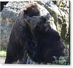 Acrylic Print featuring the photograph Grizzly Bears Fighting by John Telfer