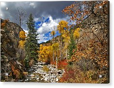 Grizzly Creek Cottonwoods Acrylic Print