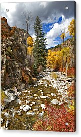 Acrylic Print featuring the photograph Grizzly Creek Cottonwoods Vertical by Jeremy Rhoades