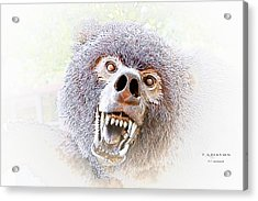 Grizzly Dream Acrylic Print