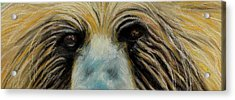 Grizzly Eyes Acrylic Print by Jeanne Fischer