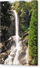 Grizzly Falls Acrylic Print by Mary Carol Story