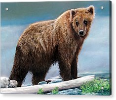 Grizzly Acrylic Print by Karen Cade