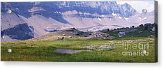 Grizzly Meadows Acrylic Print