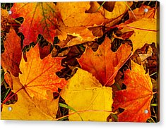 Acrylic Print featuring the photograph Ground Cover by Dennis Bucklin