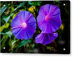 Ground Morning Glory Singapore Flower Acrylic Print by Donald Chen