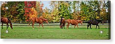 Group Activity Acrylic Print