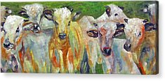 The Gathering, Cattle   Acrylic Print