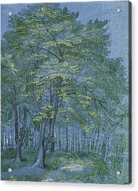 Group Of Trees In A Wood Acrylic Print by Hendrik Goltzius