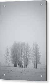 Grove Of Trees Covered In Hoar Frost On Acrylic Print by Roberta Murray