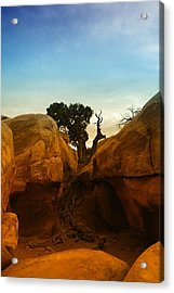 Growing Between The Rocks Acrylic Print by Jeff Swan