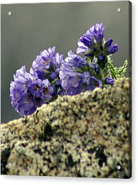 Acrylic Print featuring the photograph Growing In Granite by Jeremy Rhoades