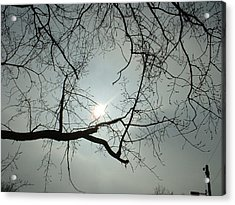 Grown In Cold Light Acrylic Print by Marc Philippe Joly