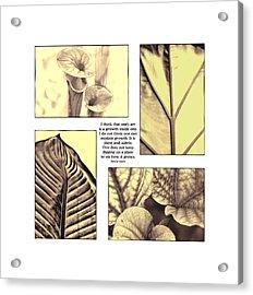 Acrylic Print featuring the photograph Growth by John Hansen