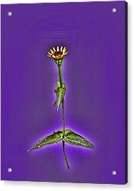 Grunge Flower - Zinnia Acrylic Print by Larry Bishop