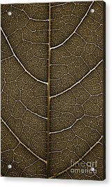 Acrylic Print featuring the photograph Grunge Leaf Detail by Carsten Reisinger