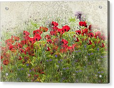 Grunge Poppy Field Acrylic Print by Lesley Rigg