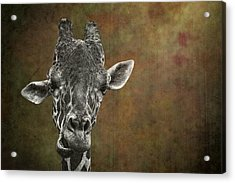 Grungy Giraffe 5654 Brown Acrylic Print